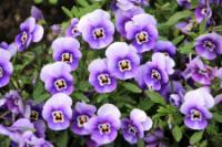 Flowers - PlantFiles